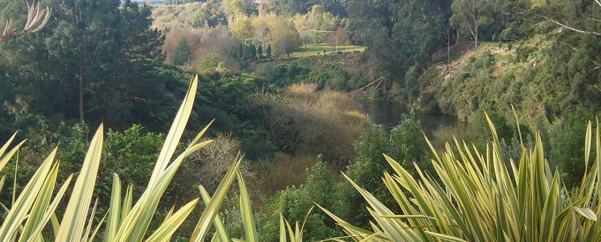 Summer Walks Time to Amble Along the Waikato River Bank