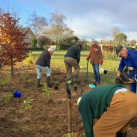Extending the top planting 5. Cambridge Tree Trust